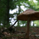 Some kid I met led me on a tour through the woods to photograph a variety of mushrooms that sprouted in the woods.
